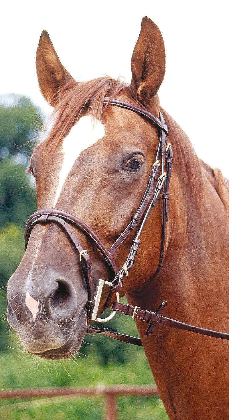 Uzdečka Premier na koně