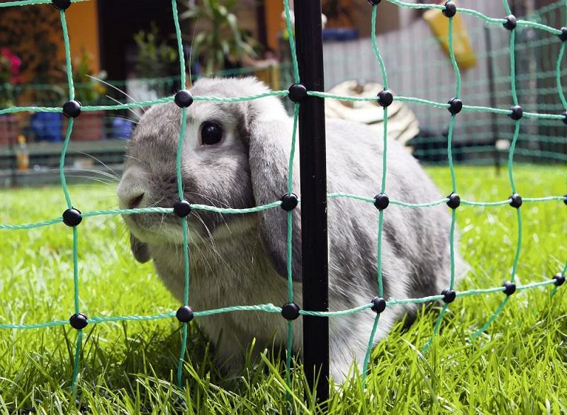 Sada na elektrický ohradník pro králíky s použitím králičí sítě 50 m