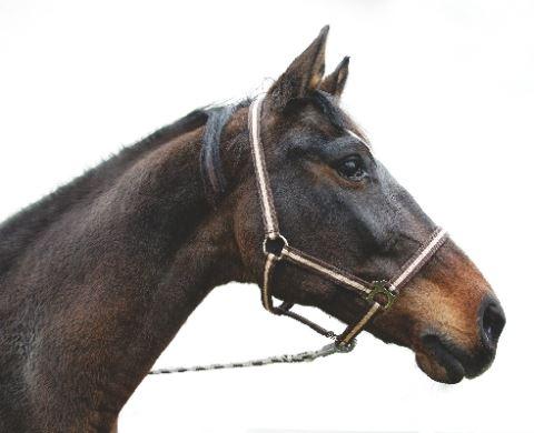 Ohlávka pro koně nylonová Hippo velikost 2 barva bordó/béžová