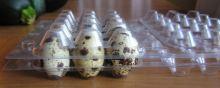 Obal plastový, blistr na křepelčí vajíčka komplet - spodní a vrchní díl na 30 vajíček