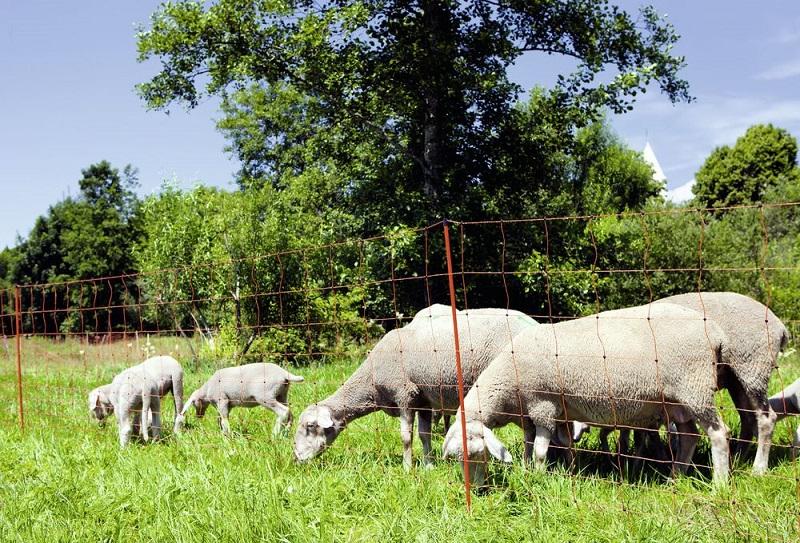Sada na elektrický ohradník pro ovce 50 m s ovčí sítí pro maximálně 6 ovcí