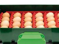 Sada držáků vajec pro líhně Covina Super 49, EGG TECH ET 49, Real 49