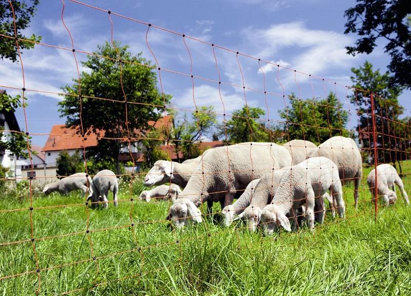 Sada na elektrický ohradník 230V pro ovce 100 m s ohradníkovou ovčí sítí a brankou