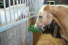 Misková kolíková plastová napáječka La GÉE Polyflex pro ovce, kozy, skot a koně